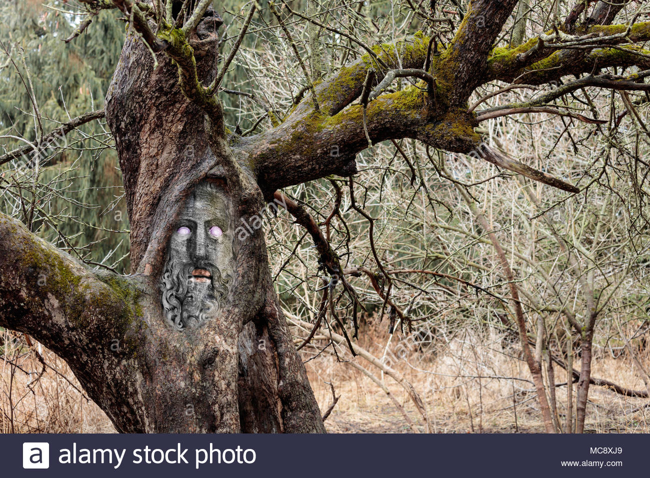 tree-deity-talking-tree-forest-spirit-ol