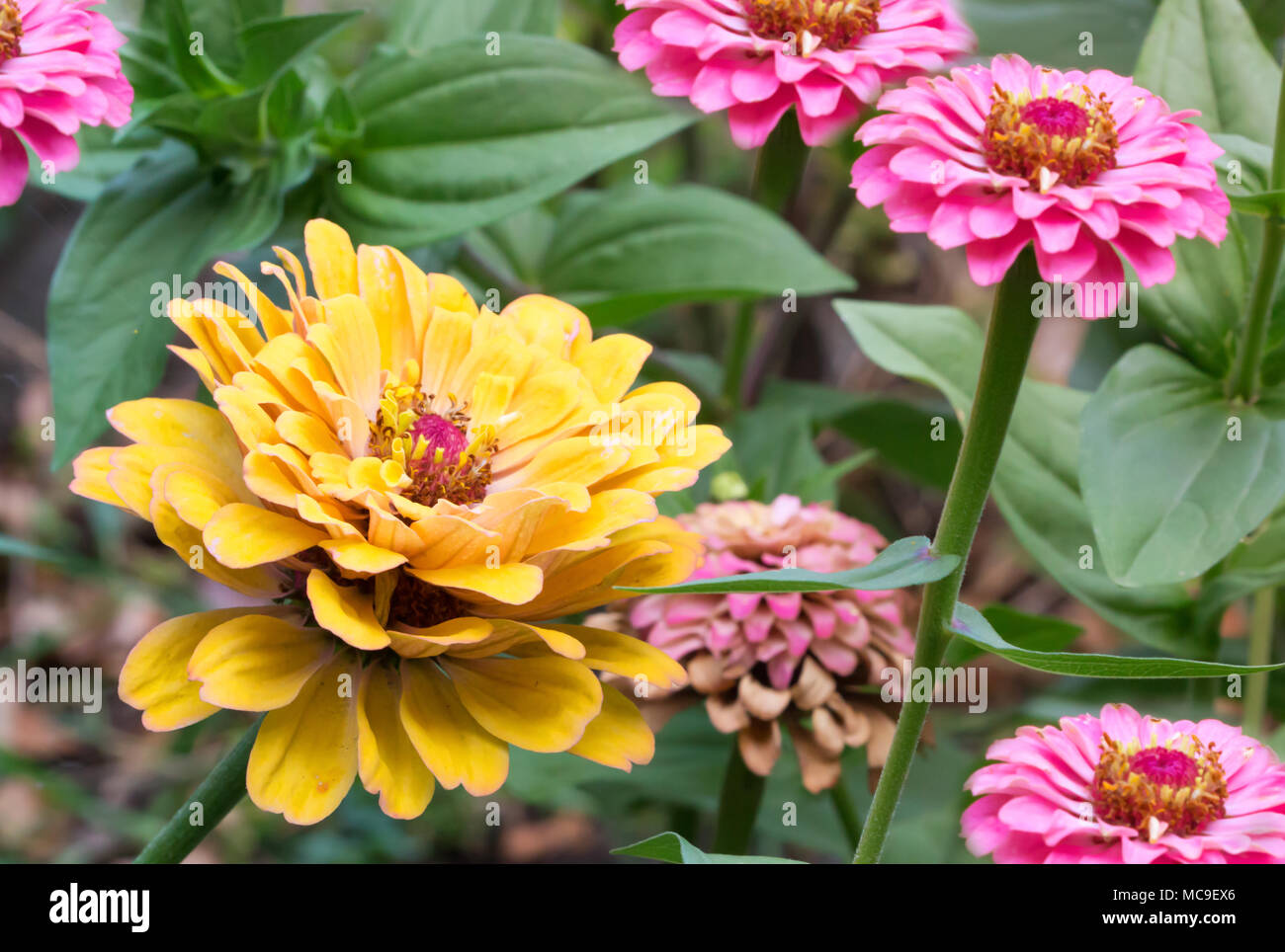 Closeup Of Beautiful Summer Flowers In The Garden Background Stock