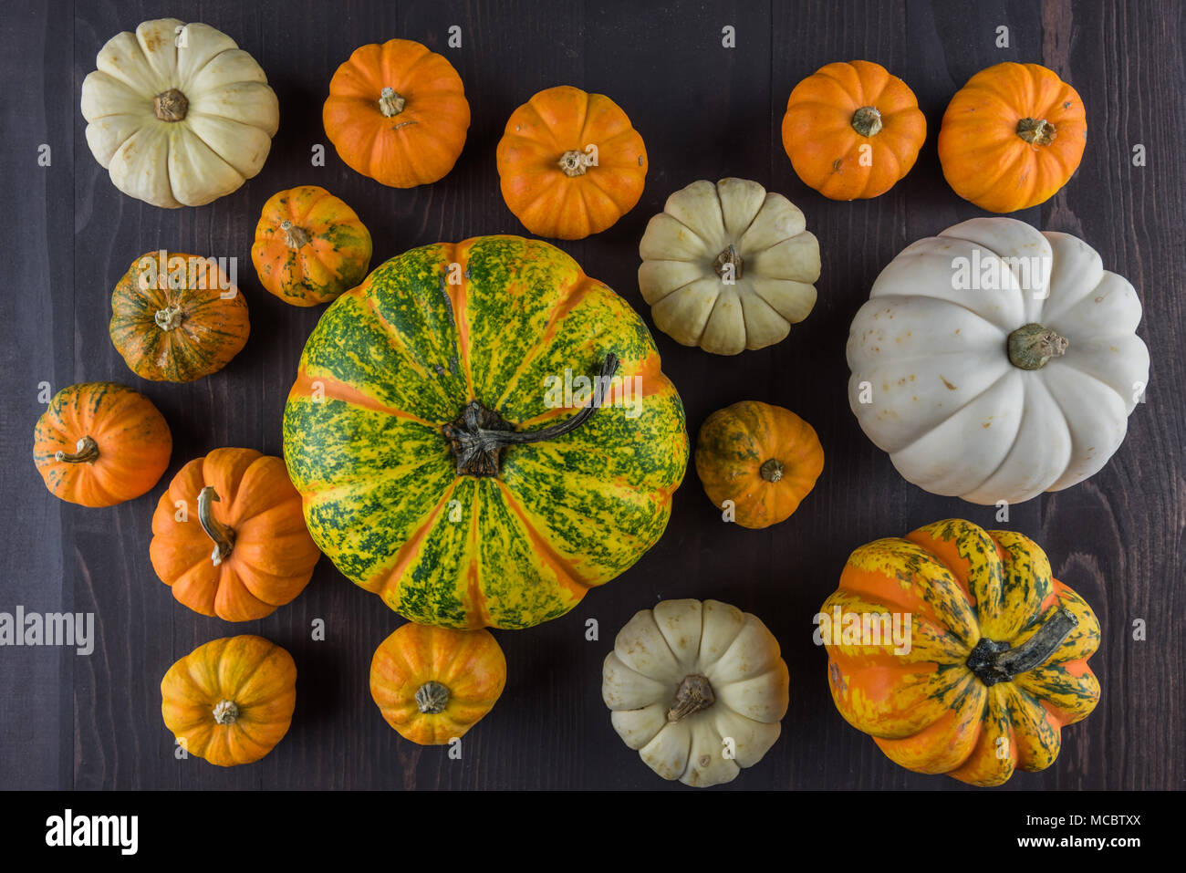 Brightly Colored Pumpkins on Dark Wood Background from above - Stock Image