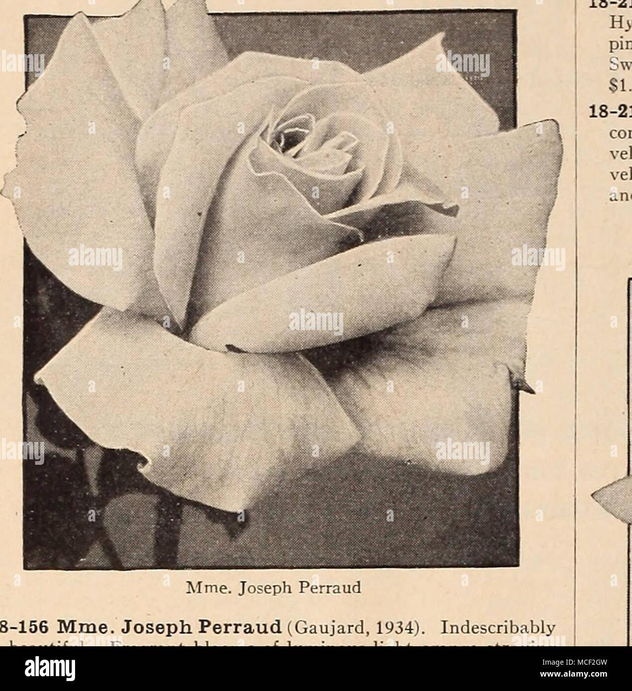 18 156 mme joseph perraud gaujard 1934 indescribably beautiful 18 156 mme joseph perraud gaujard 1934 indescribably beautiful izmirmasajfo