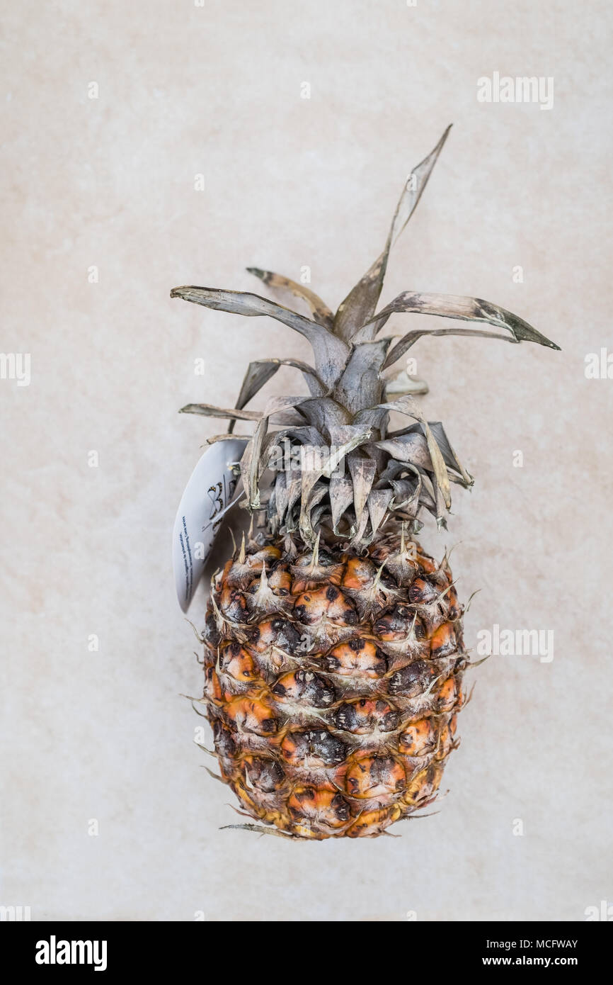 Rotting pineapple food waste cmplete with food label - Stock Image