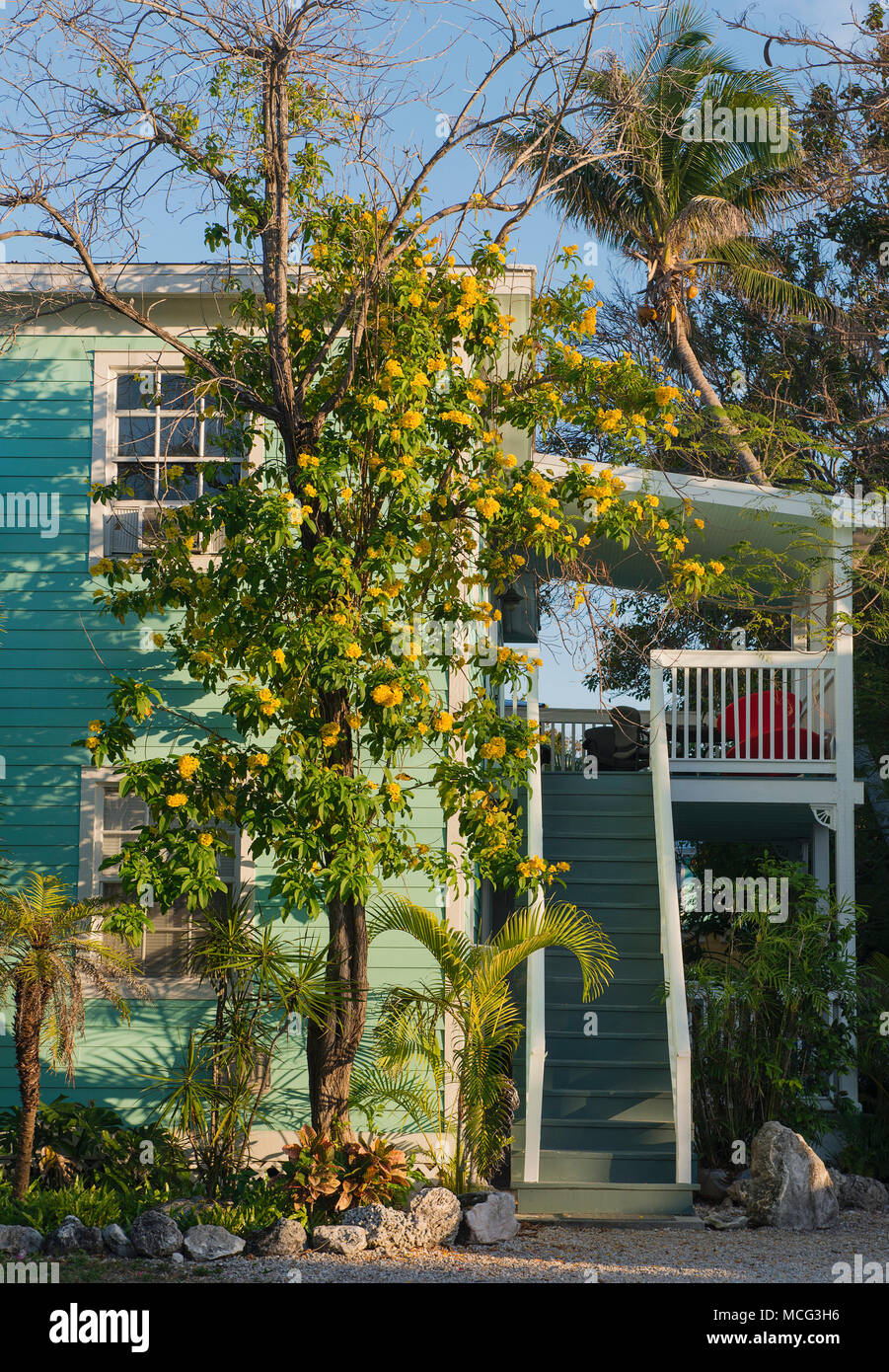 A Building With A Blooming Yellow Plant In Key West Florida Stock