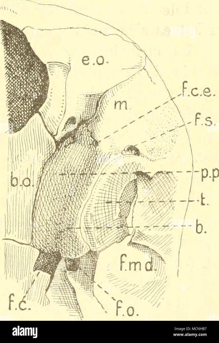 Großzügig Saladin Anatomie Und Physiologie 6. Auflage Testbank Ideen ...