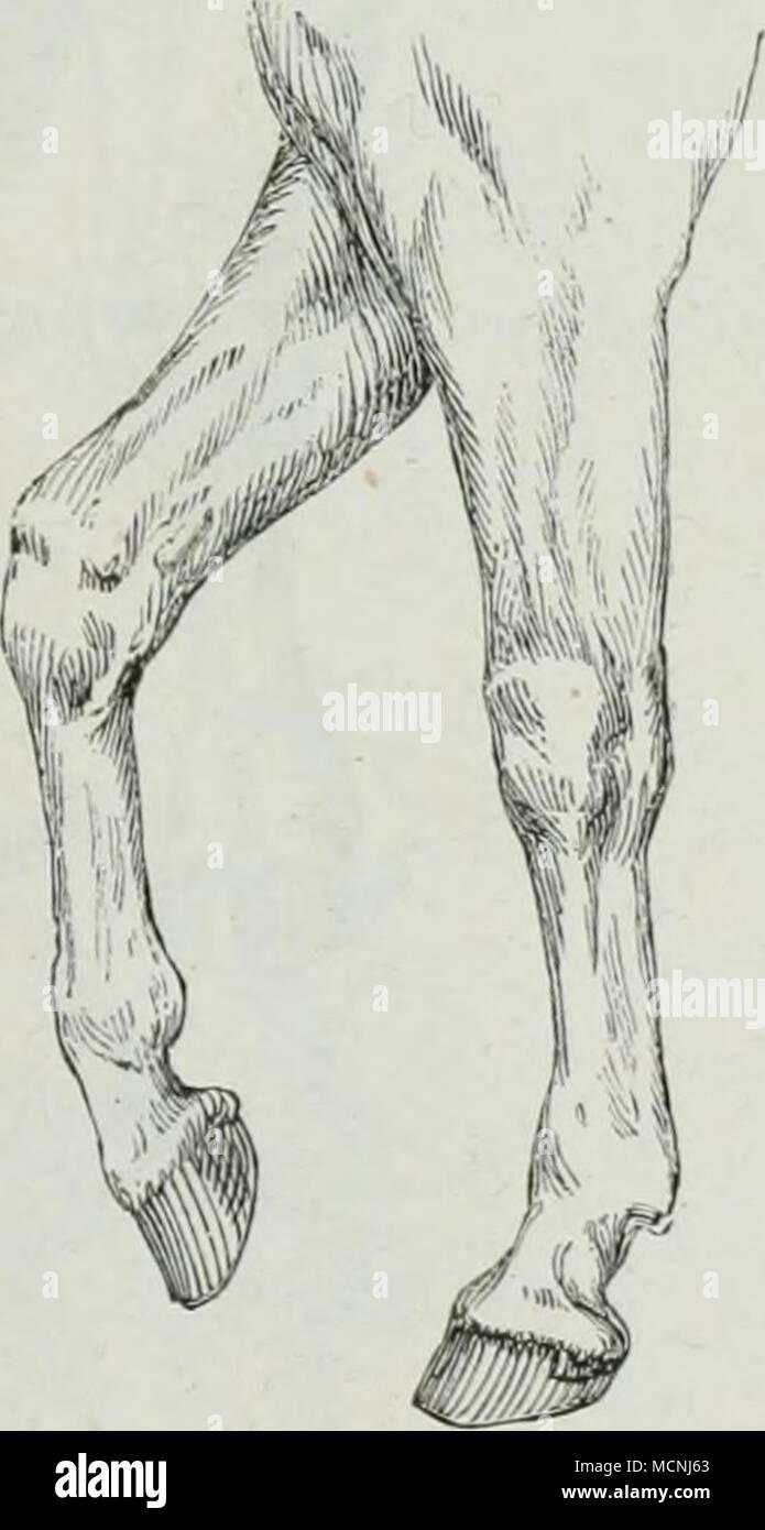 Atemberaubend Anatomie Der Knie Muskeln Und Sehnen Bilder ...