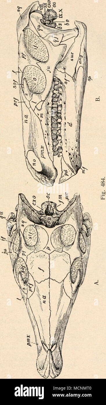 Fein Armvene Anatomie Iv Bilder - Menschliche Anatomie Bilder ...