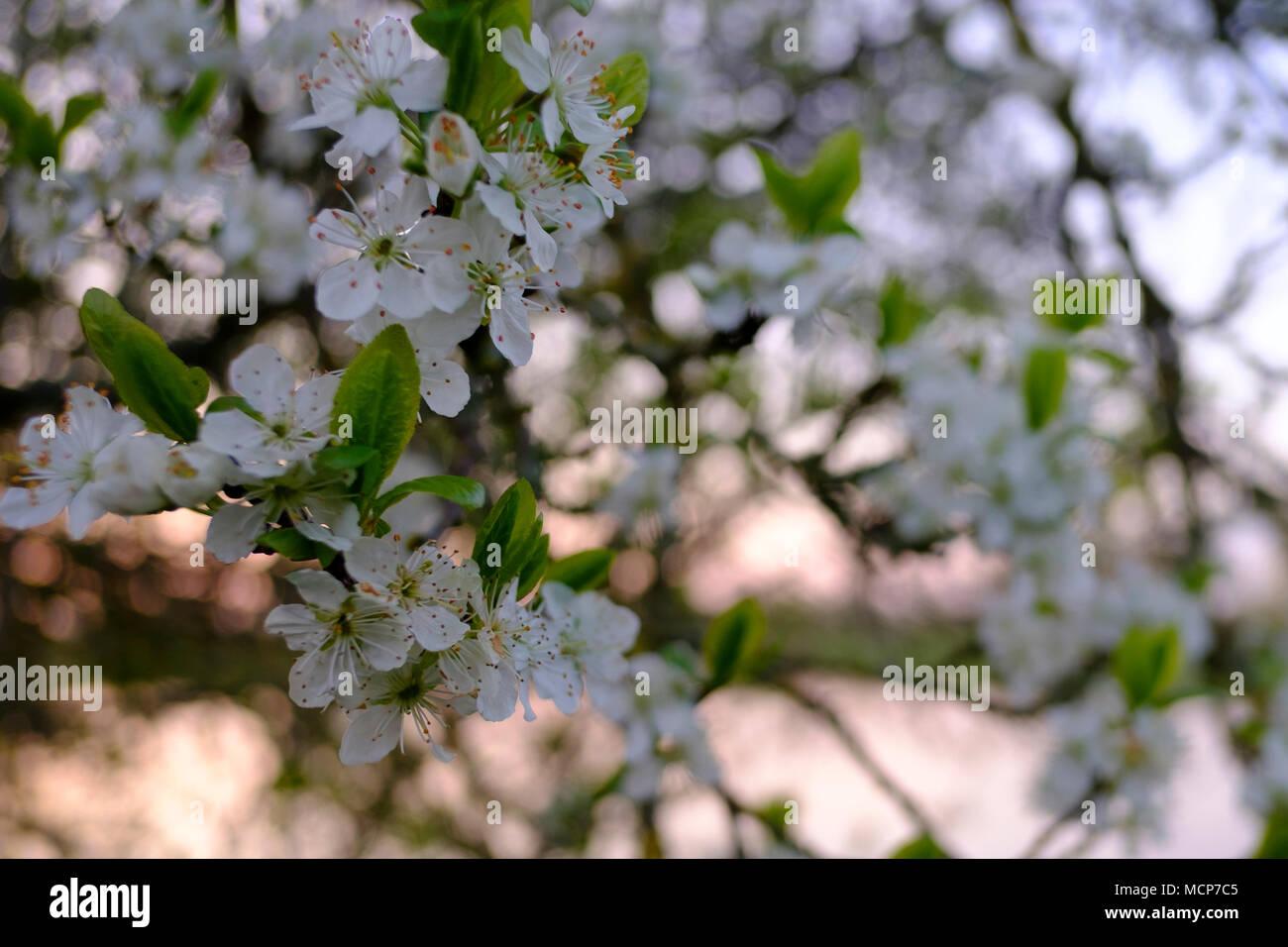 Salisbury Wiltshire 18th Apr 2018 Uk Weather Salisbury Wiltshire