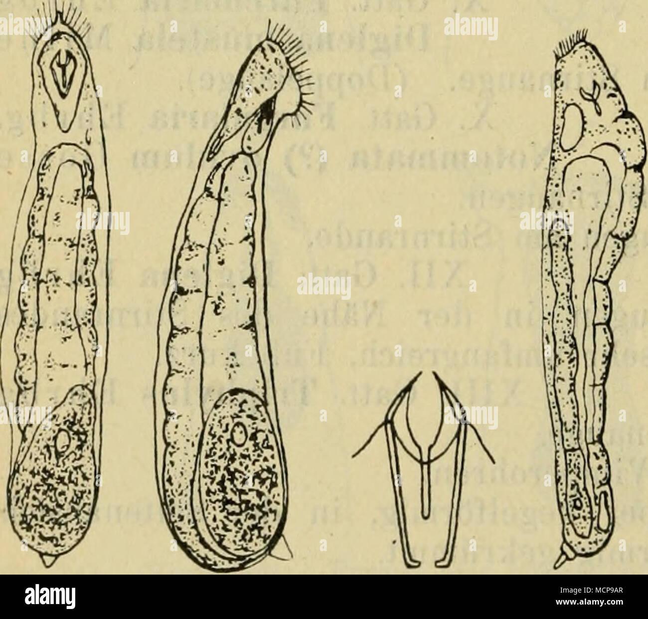 Wunderbar Kostenlose Online Anatomie Bilder - Menschliche Anatomie ...