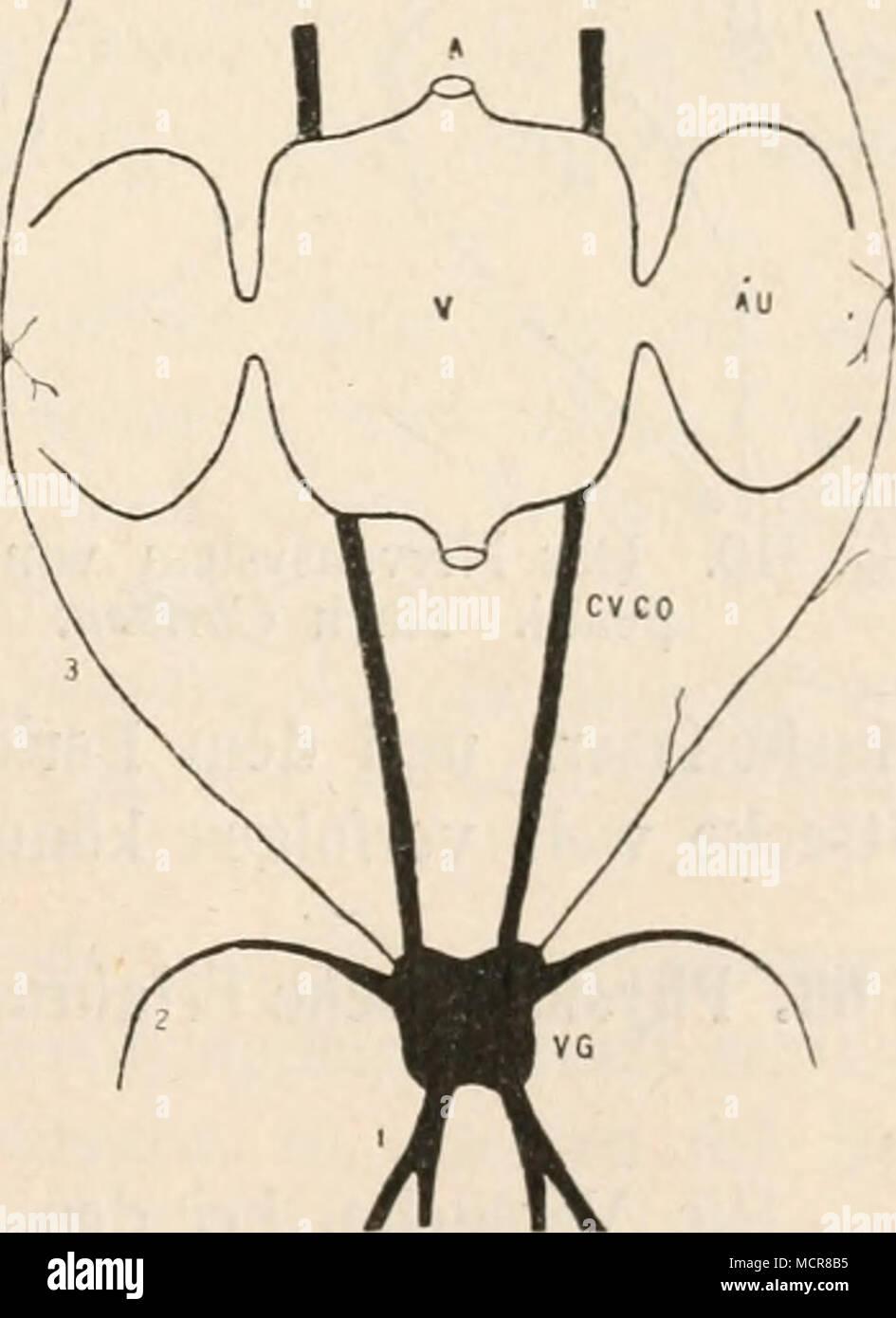 Ungewöhnlich Menschliches Nervensystem Arbeitsblatt Galerie - Mathe ...