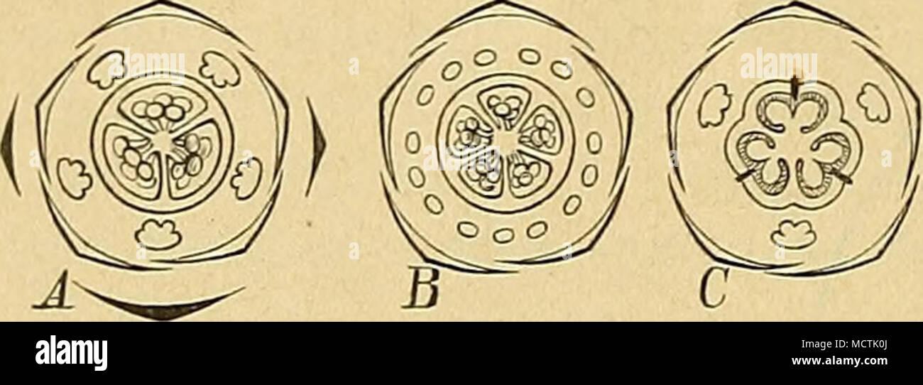 Fantastisch Spanisch Körperteile Diagramm Zeitgenössisch ...