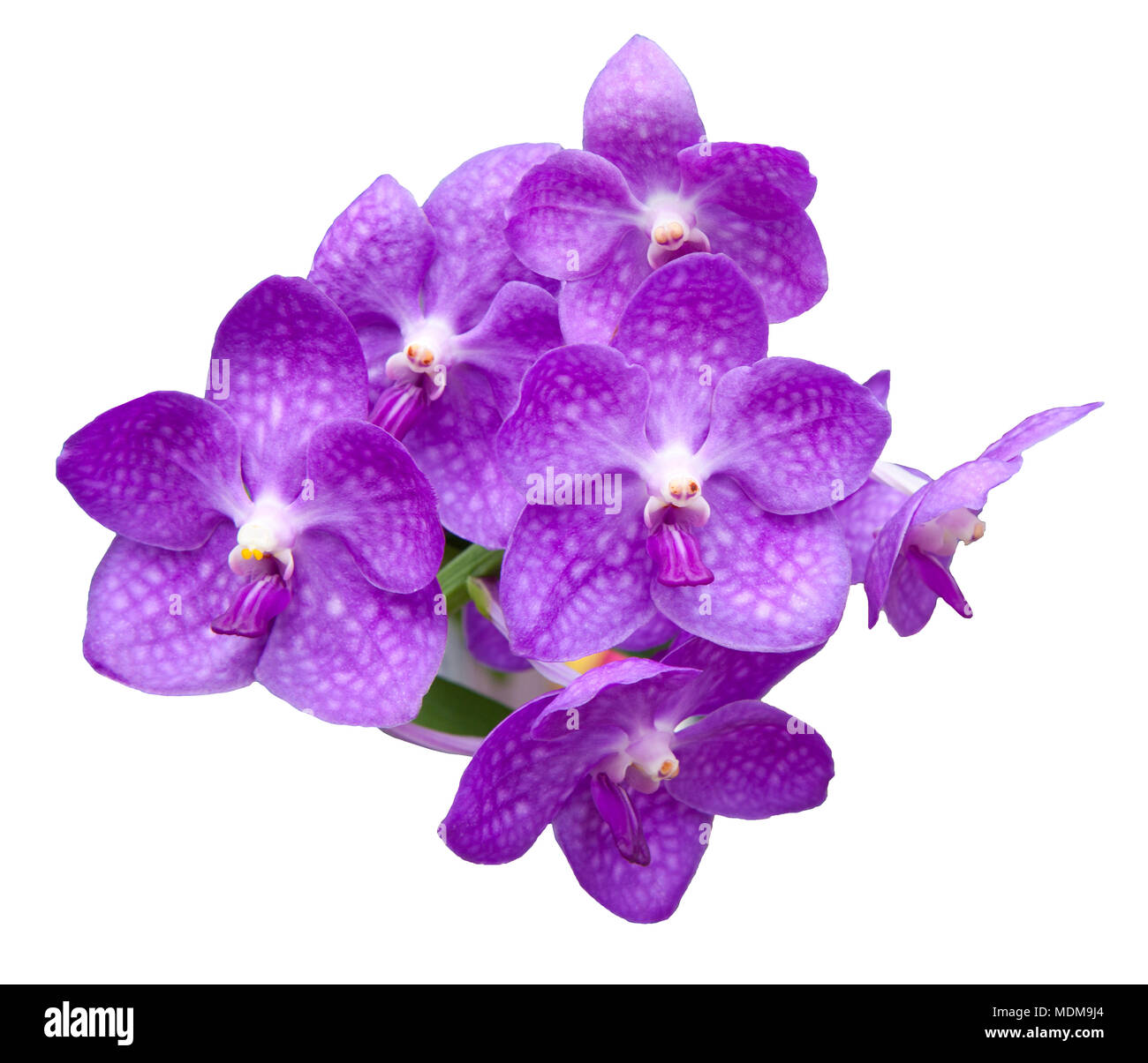 file of orchid flowers bouquet isolated on white background Stock ...