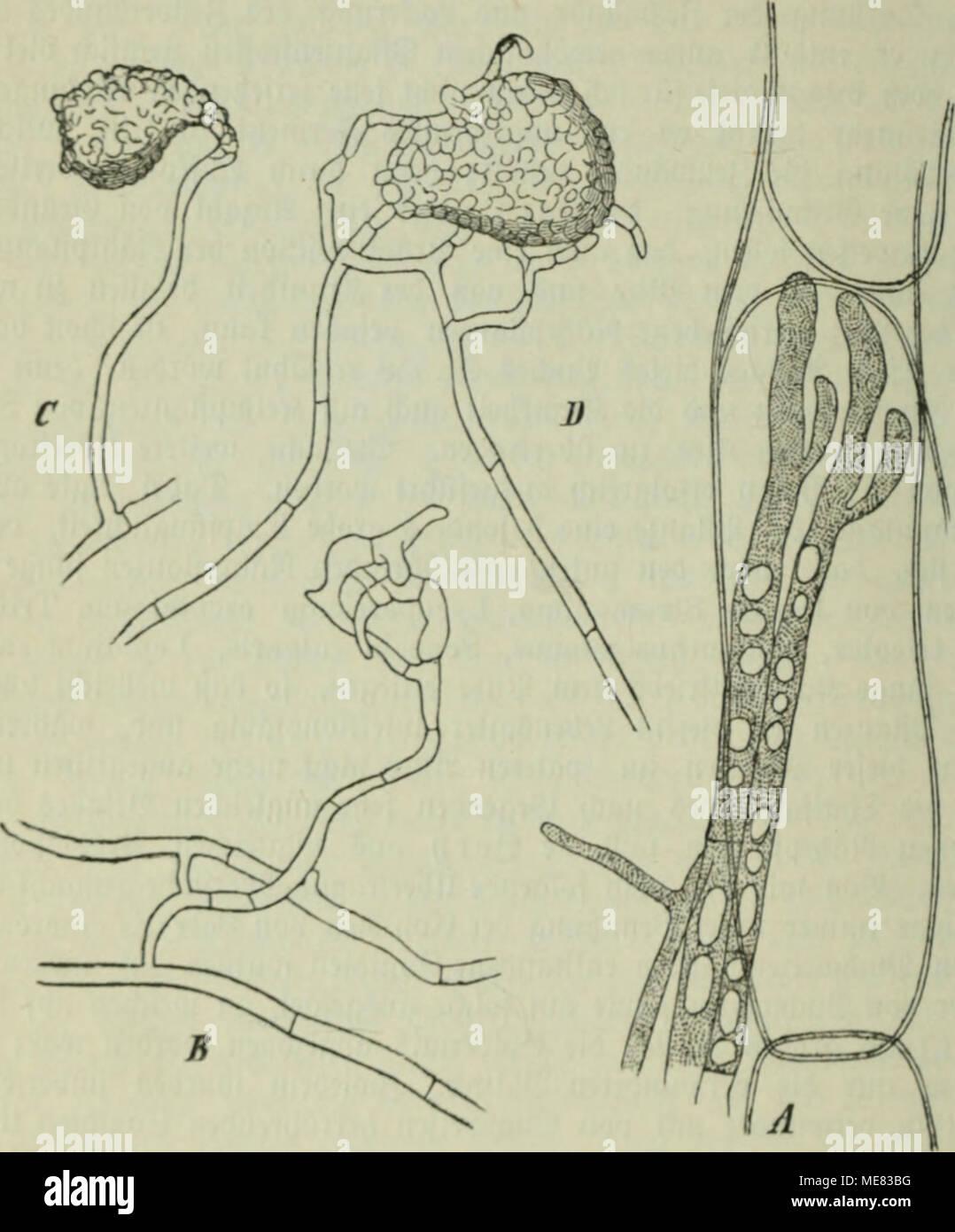 Großzügig Bii Anatomie Galerie - Menschliche Anatomie Bilder ...