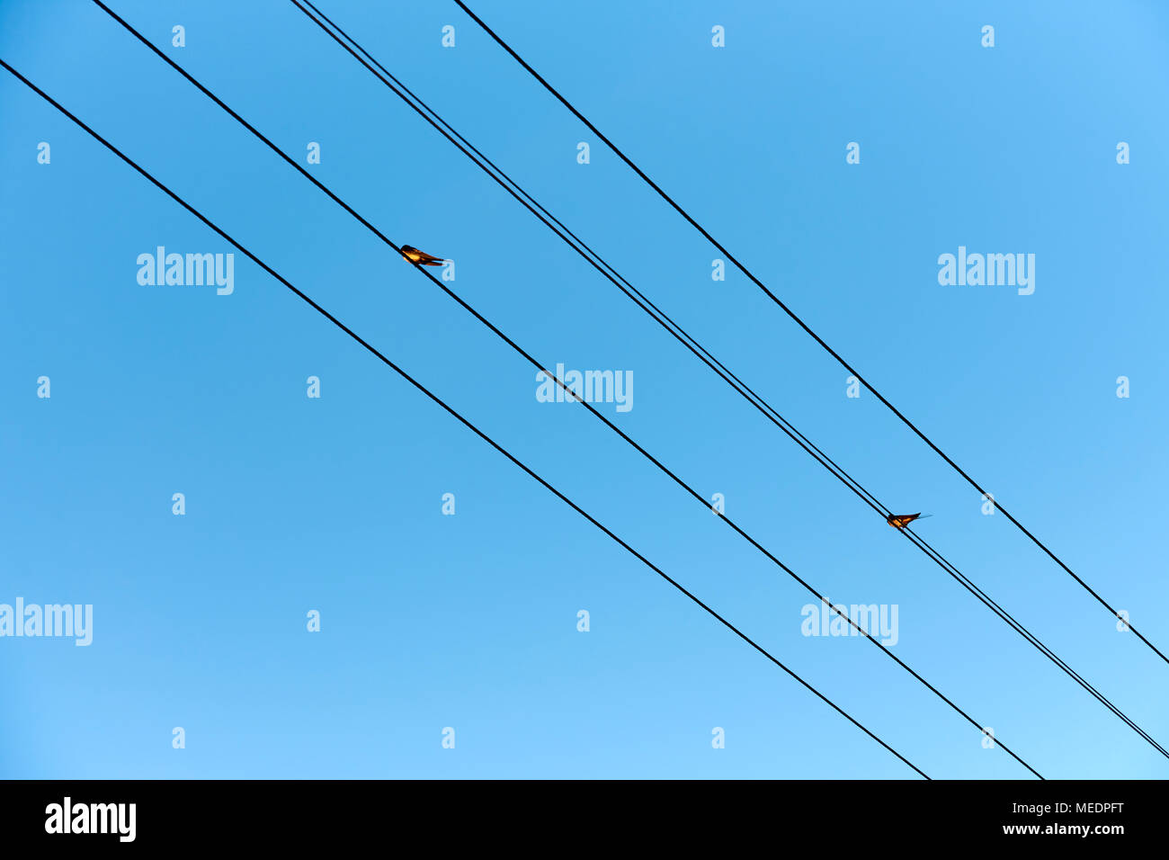 Two swallow sitting on wires of power lines under blue sky, with ...