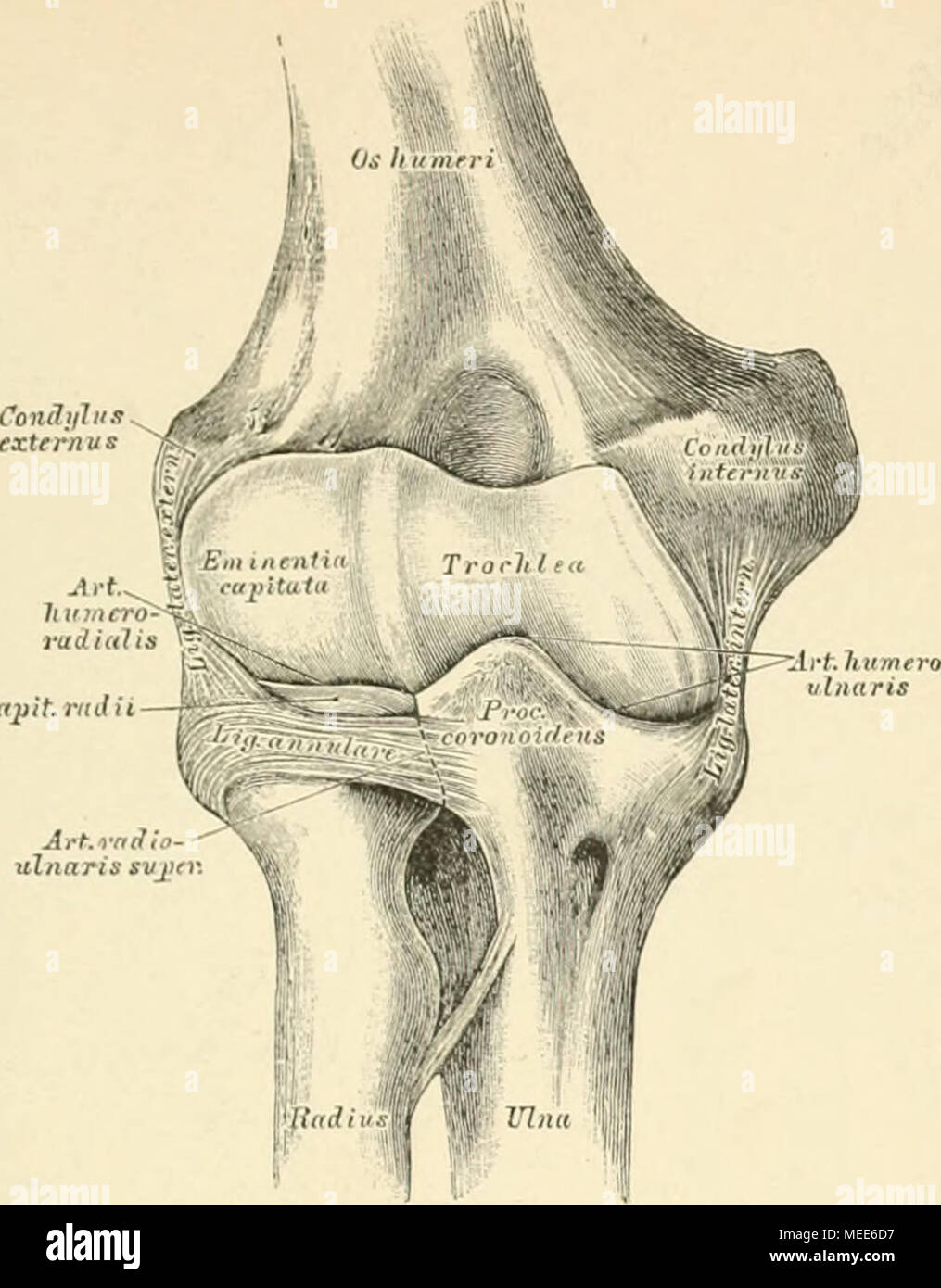 Beste Anatomie Der Knochen Des Fußes Fotos - Menschliche Anatomie ...