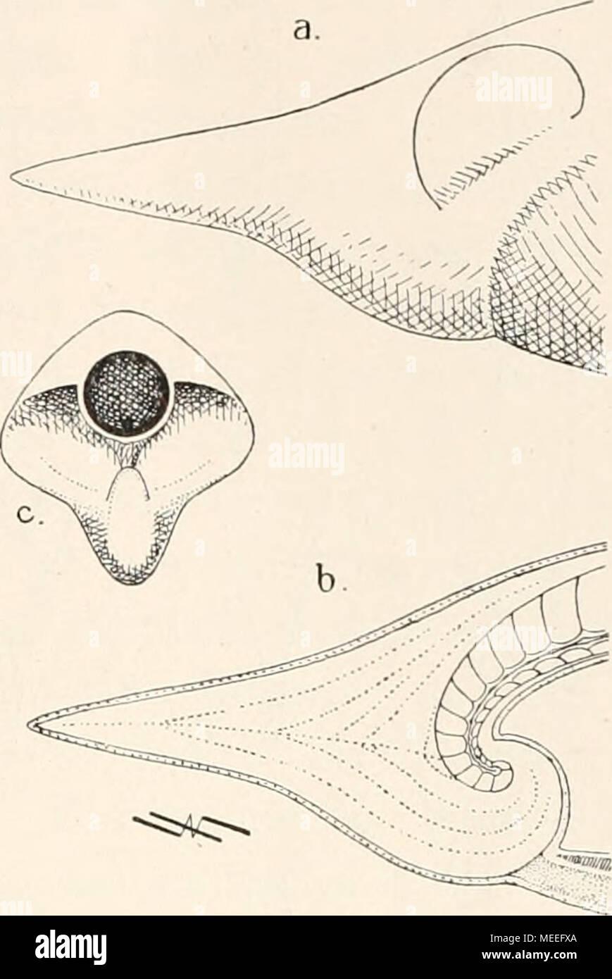 Fein Anatomie Und Physiologie 6. Auflage Galerie - Menschliche ...