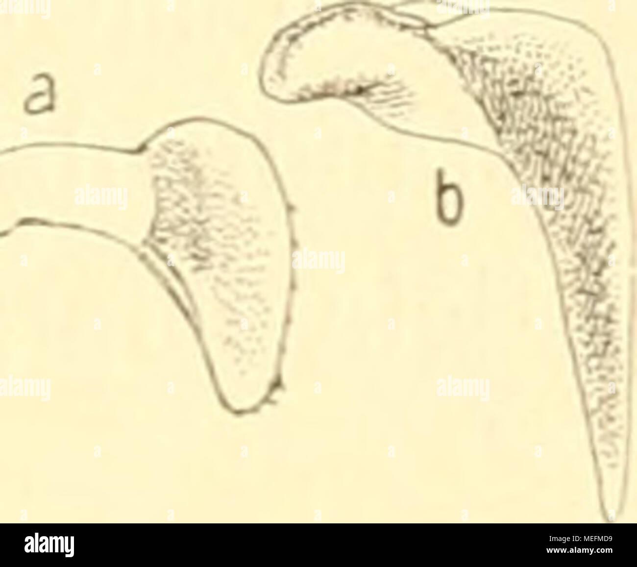 Fantastisch Atmungssystem Anatomie Und Physiologie Notizen ...