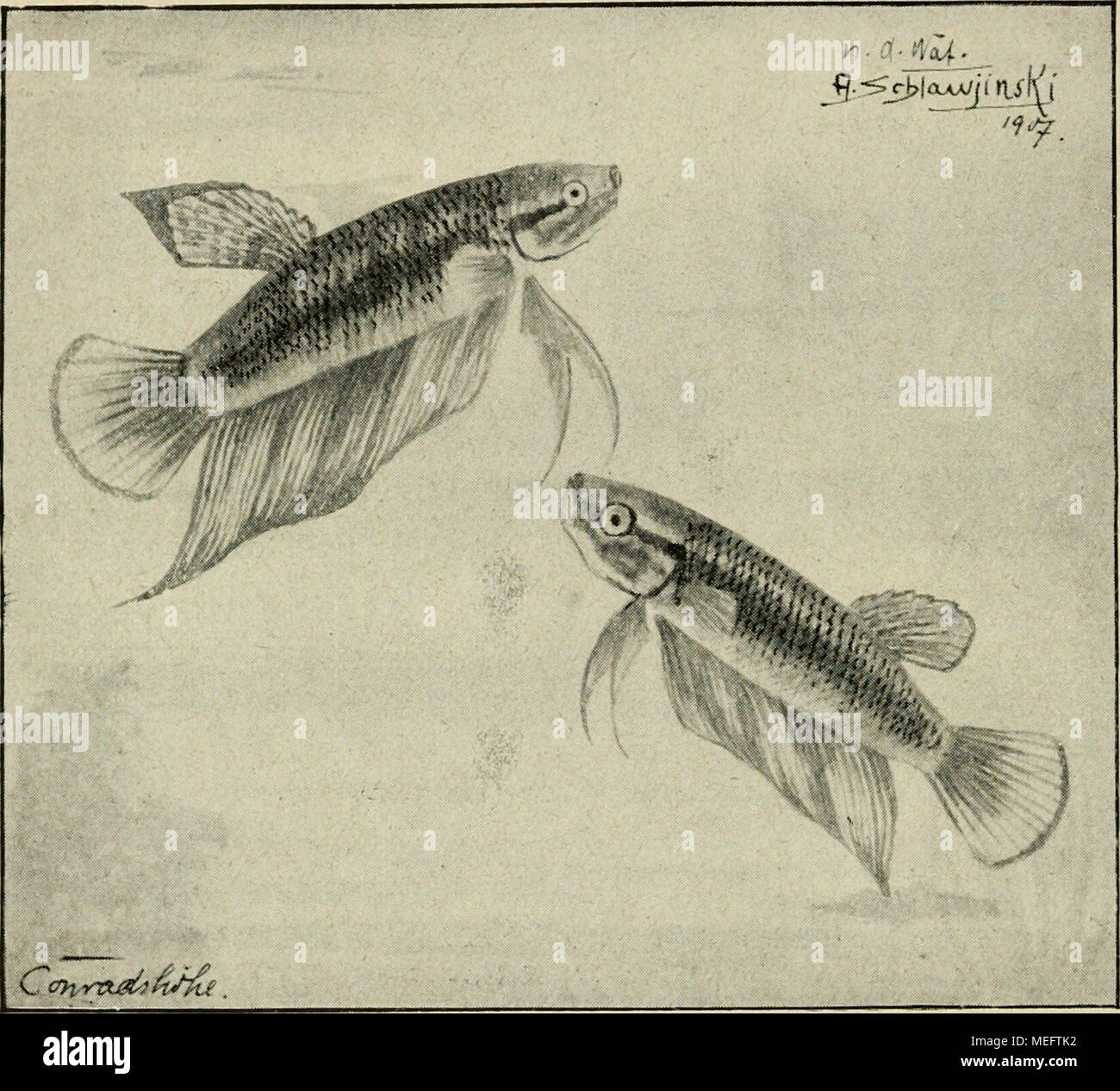 Nett Tropische Fische Färbung Seite Fotos - Beispielzusammenfassung ...