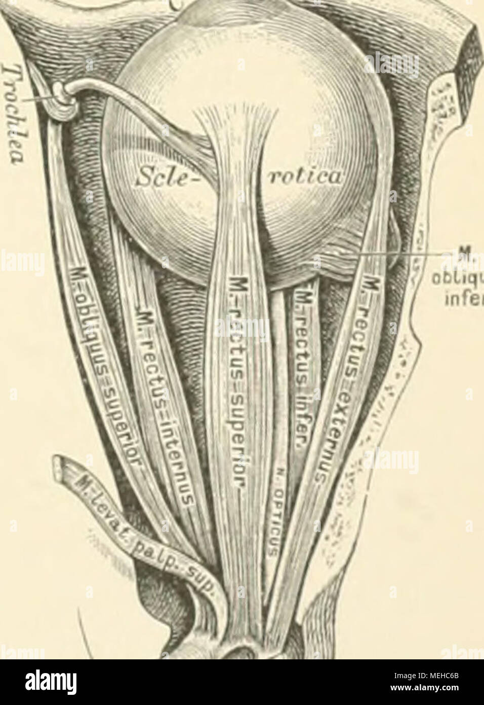 Wunderbar Seeley Anatomie Und Physiologie 9. Auflage Studienführer ...