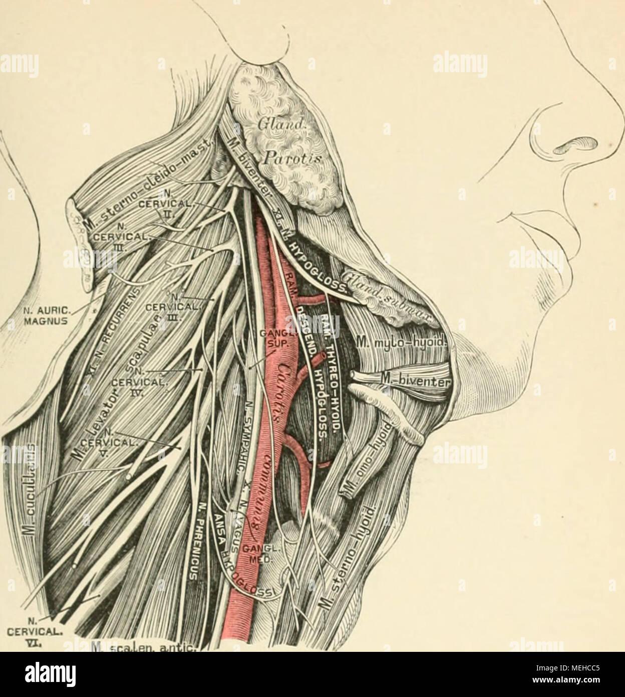 Fantastisch Die Anatomie Des Graus Galerie - Menschliche Anatomie ...