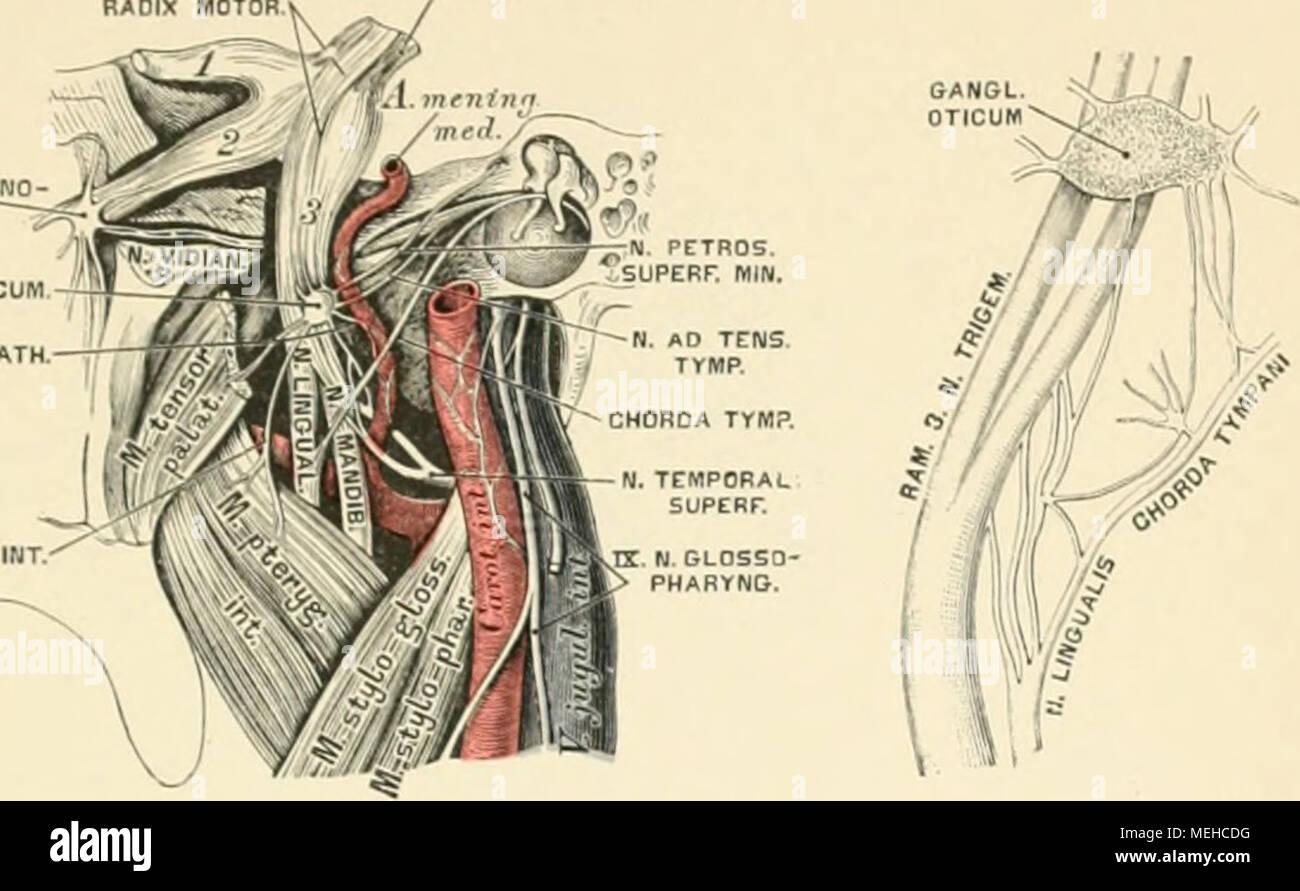 Fantastisch Anatomie Des Menschen Durch Martini Bilder - Anatomie ...