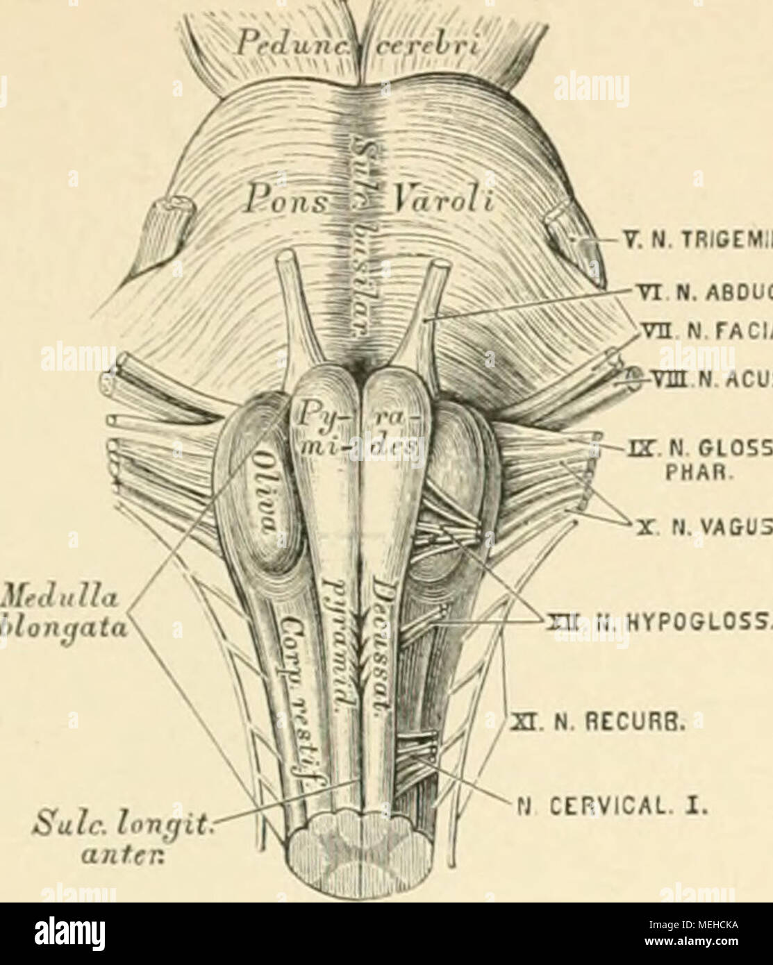 Großzügig Anatomie Und Physiologie Färbung Arbeitsmappe Kapitel 7 ...