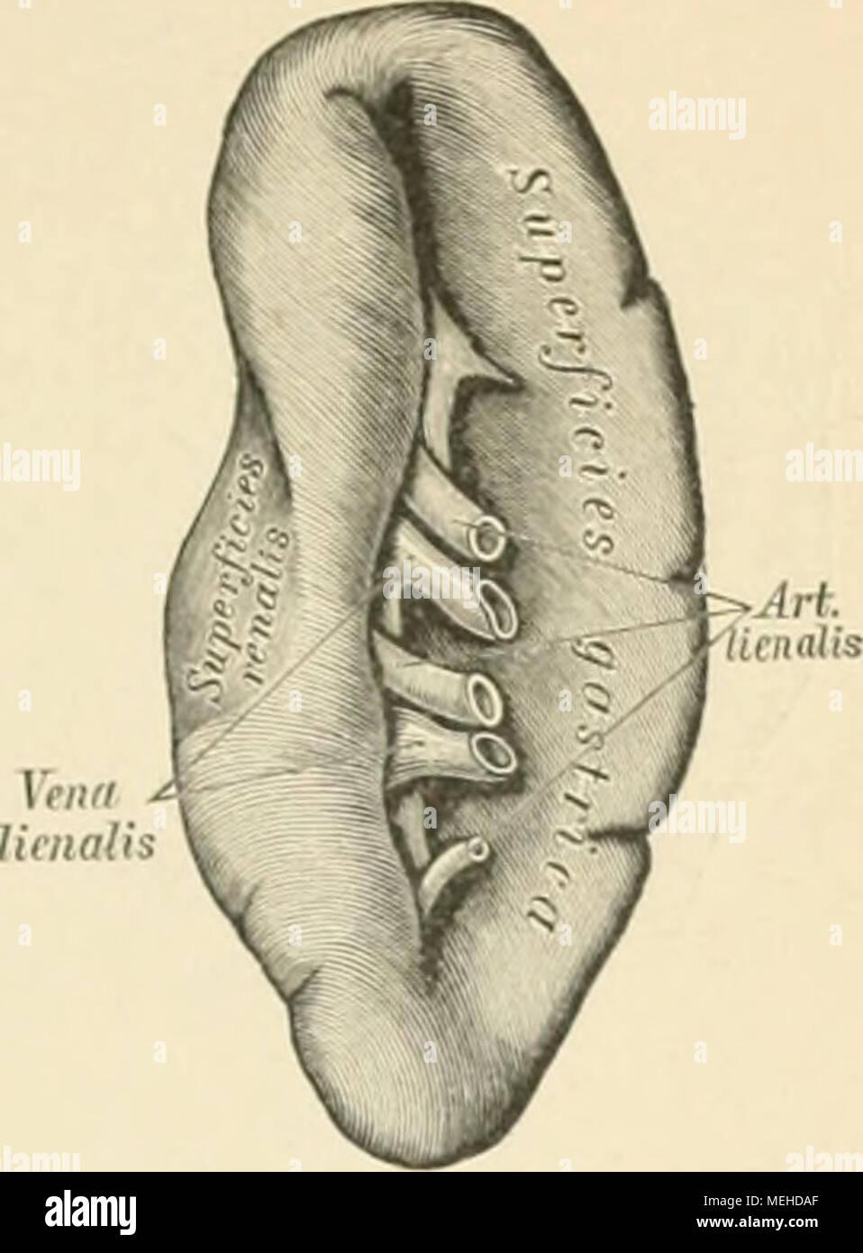 Ziemlich Anatomie Und Physiologie Färbung Arbeitsmappe Körpergewebe ...