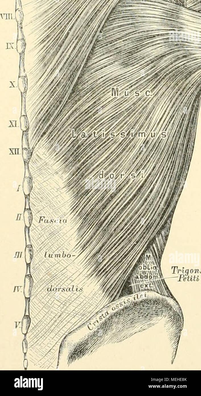 Ausgezeichnet Rattenhirnanatomie Fotos - Anatomie Ideen - finotti.info