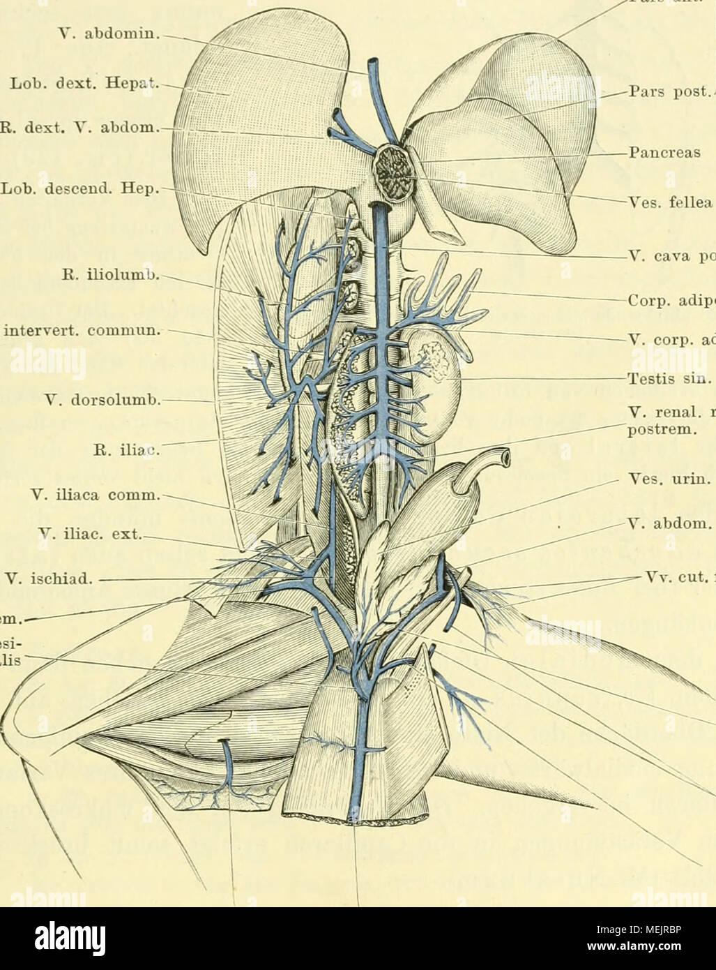Nett Billroth 2 Anatomie Ideen - Menschliche Anatomie Bilder ...