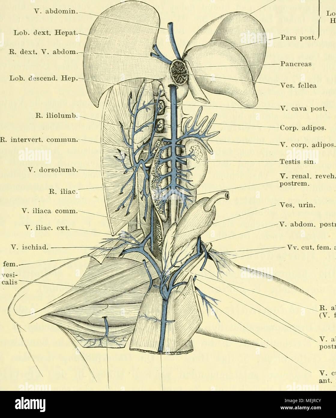 Tolle Menschliche Anatomie 8. Auflage Bilder - Menschliche Anatomie ...
