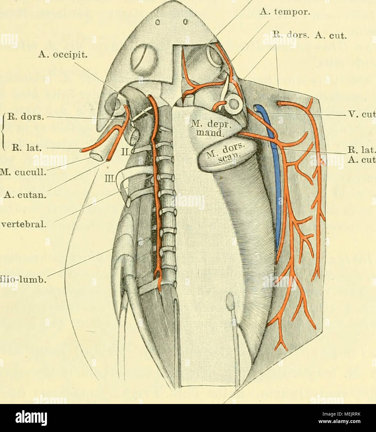 Großzügig Greys Anatomy Mc Dampfig Fotos - Anatomie Von Menschlichen ...