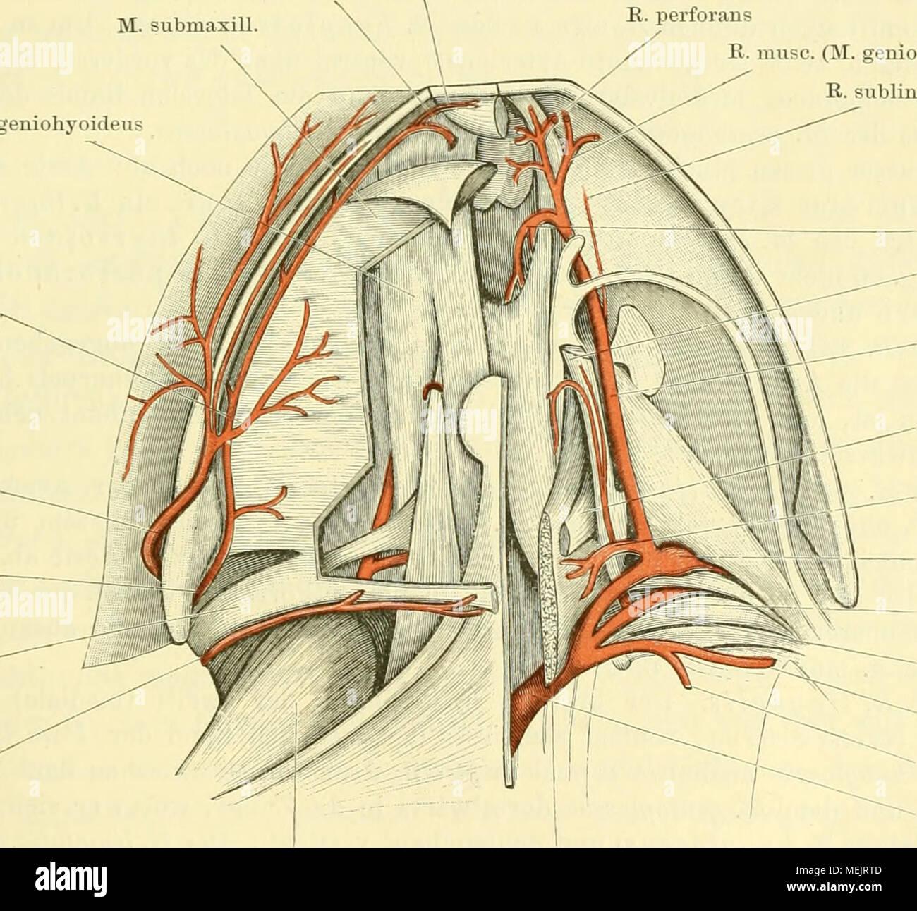 Charmant Bilder Von Der Anatomie Bilder - Anatomie Ideen - finotti.info