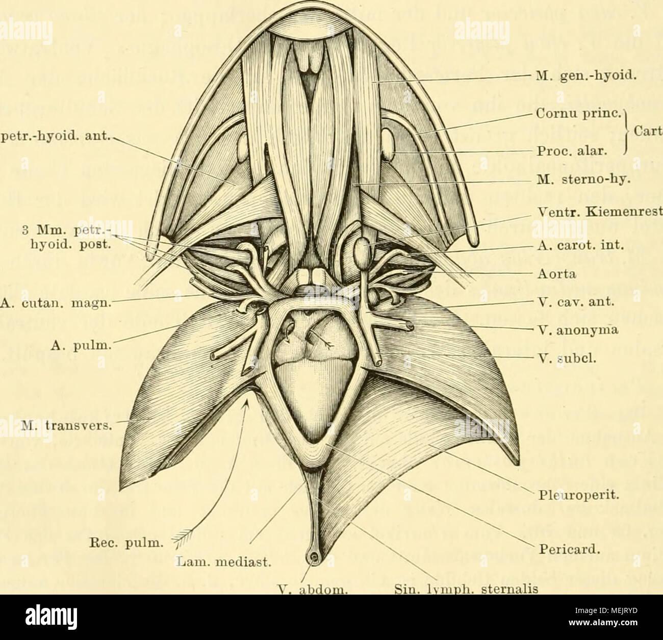 Nett Innere Anatomie Des Regenwurmes Ideen - Menschliche Anatomie ...