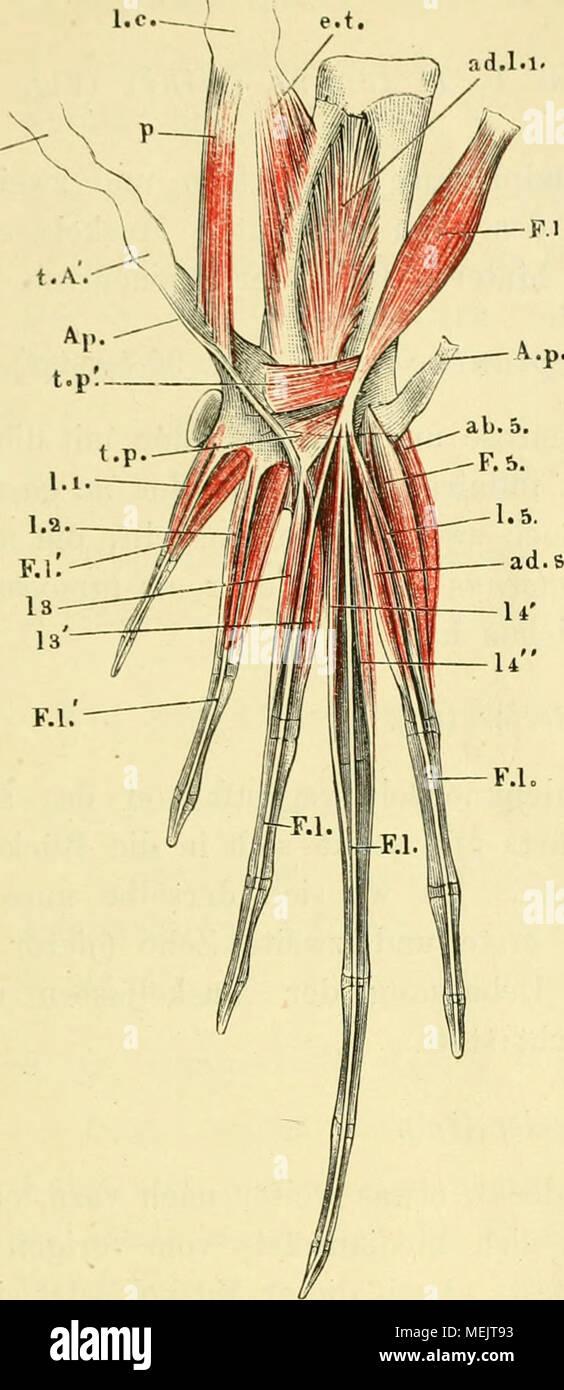 Ungewöhnlich Marieb Anatomie Und Physiologie 10. Ausgabe Fotos ...