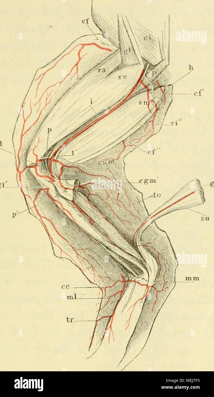 Nett Anatomie Und Physiologie Labor Praktisch Bilder - Menschliche ...