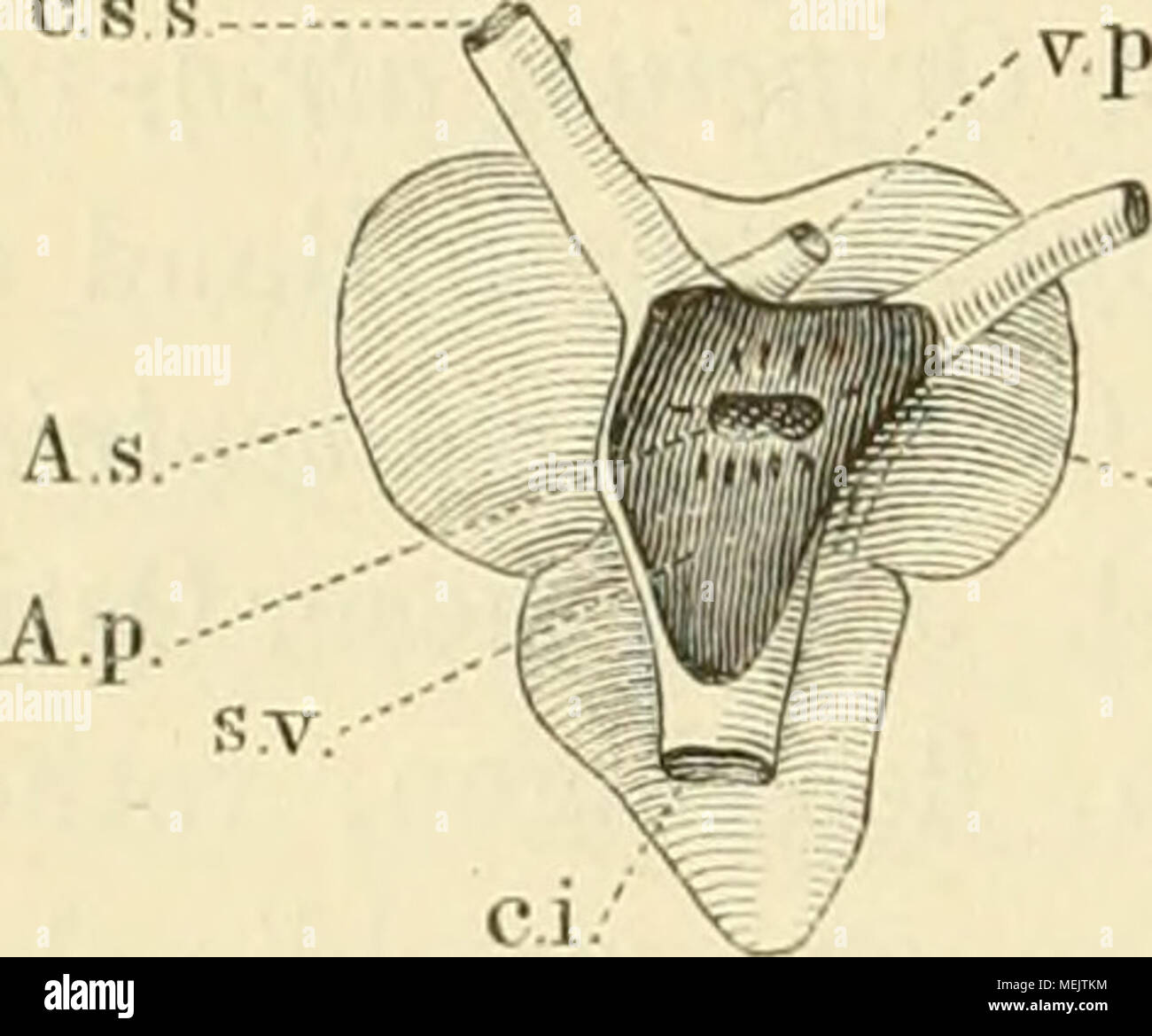 Wunderbar Quizlet Anatomie Und Physiologie Kapitel 4 Test ...