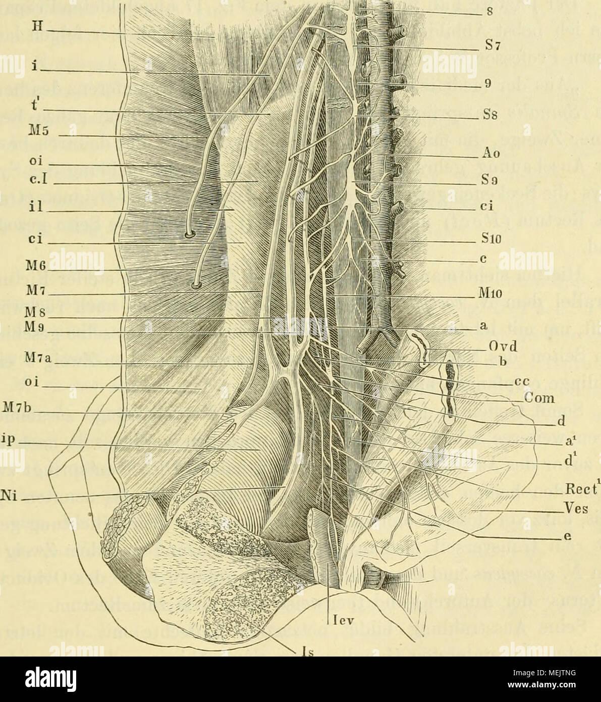 Groß Kapitel 9 Anatomie Und Physiologie Arbeitsmappe Antworten Ideen ...