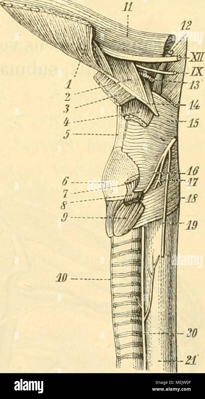 Ungewöhnlich Menschliche Anatomie Und Physiologie Für Dummies Pdf ...