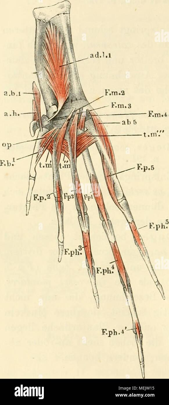 Fein Grau Grau Anatomie Ideen - Anatomie Ideen - finotti.info
