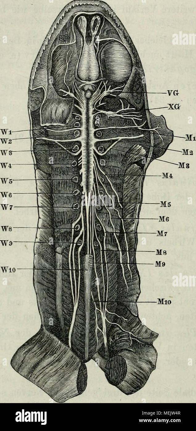 Nett Labor Anatomie Und Physiologie Fotos - Menschliche Anatomie ...