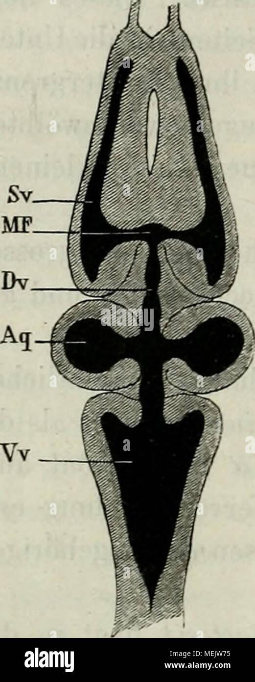 Beste Stufe 3 Anatomie Und Physiologie Quiz Fotos - Menschliche ...