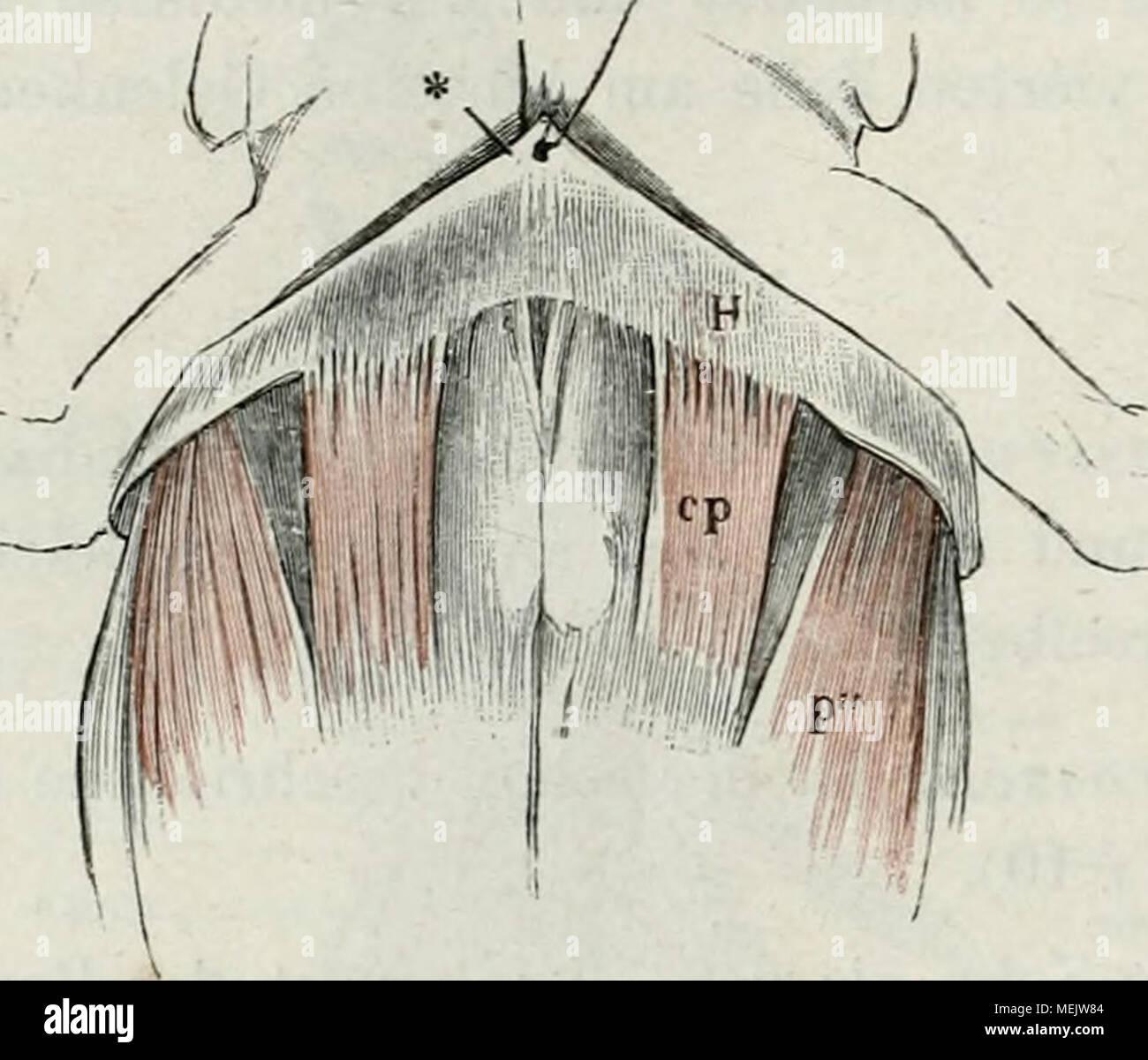 Ziemlich Ct Anatomie Des Beckens Galerie - Anatomie Ideen - finotti.info