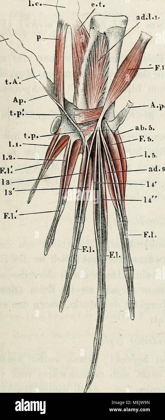 Gemütlich Anatomie Und Physiologie Färbung Arbeitsmappe Antworten ...