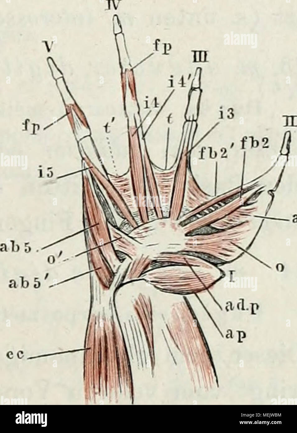 Großzügig Mcgraw Anatomie Und Physiologie Quiz Zeitgenössisch ...