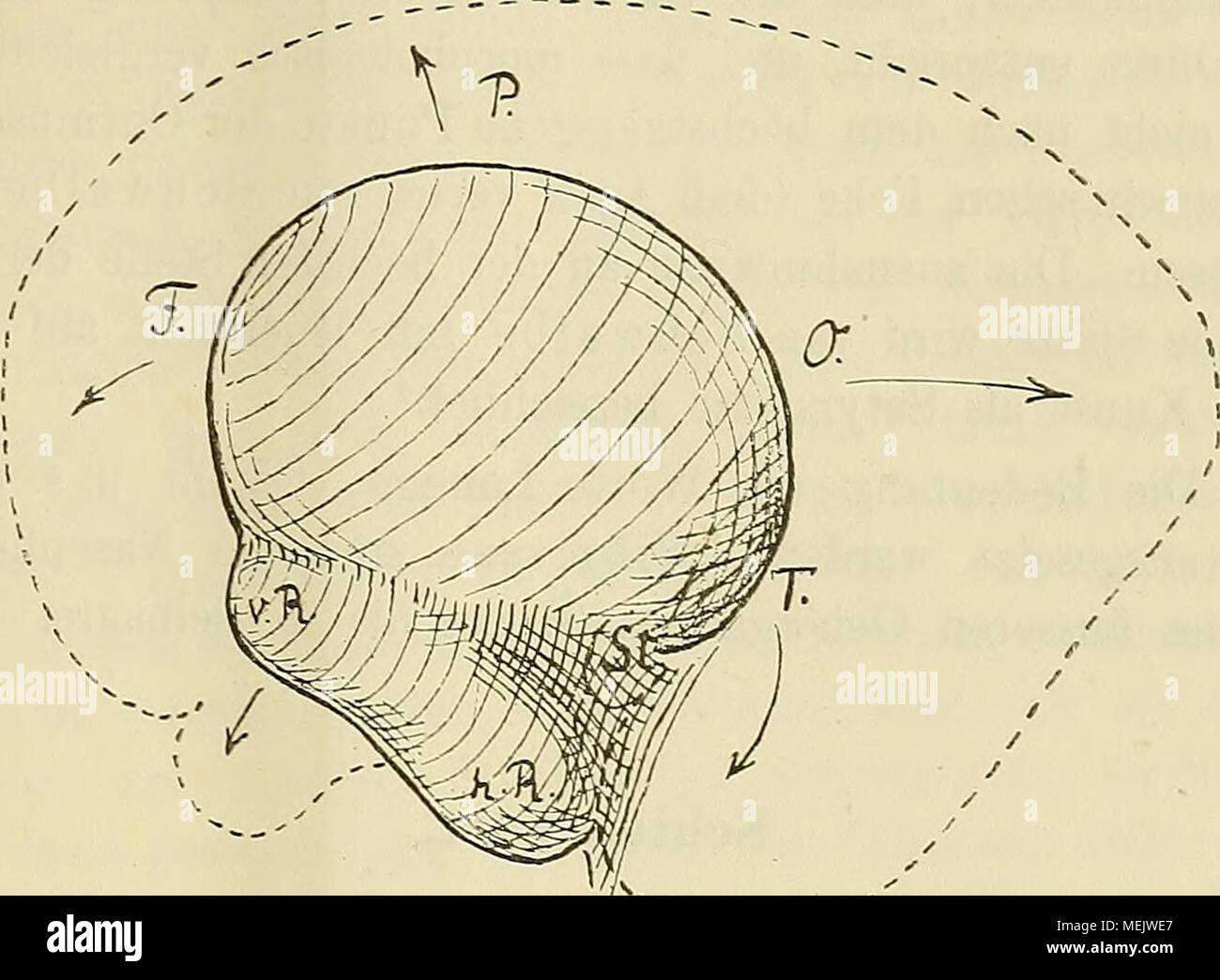 Wunderbar Die Anatomie Ort Ideen - Anatomie Ideen - finotti.info
