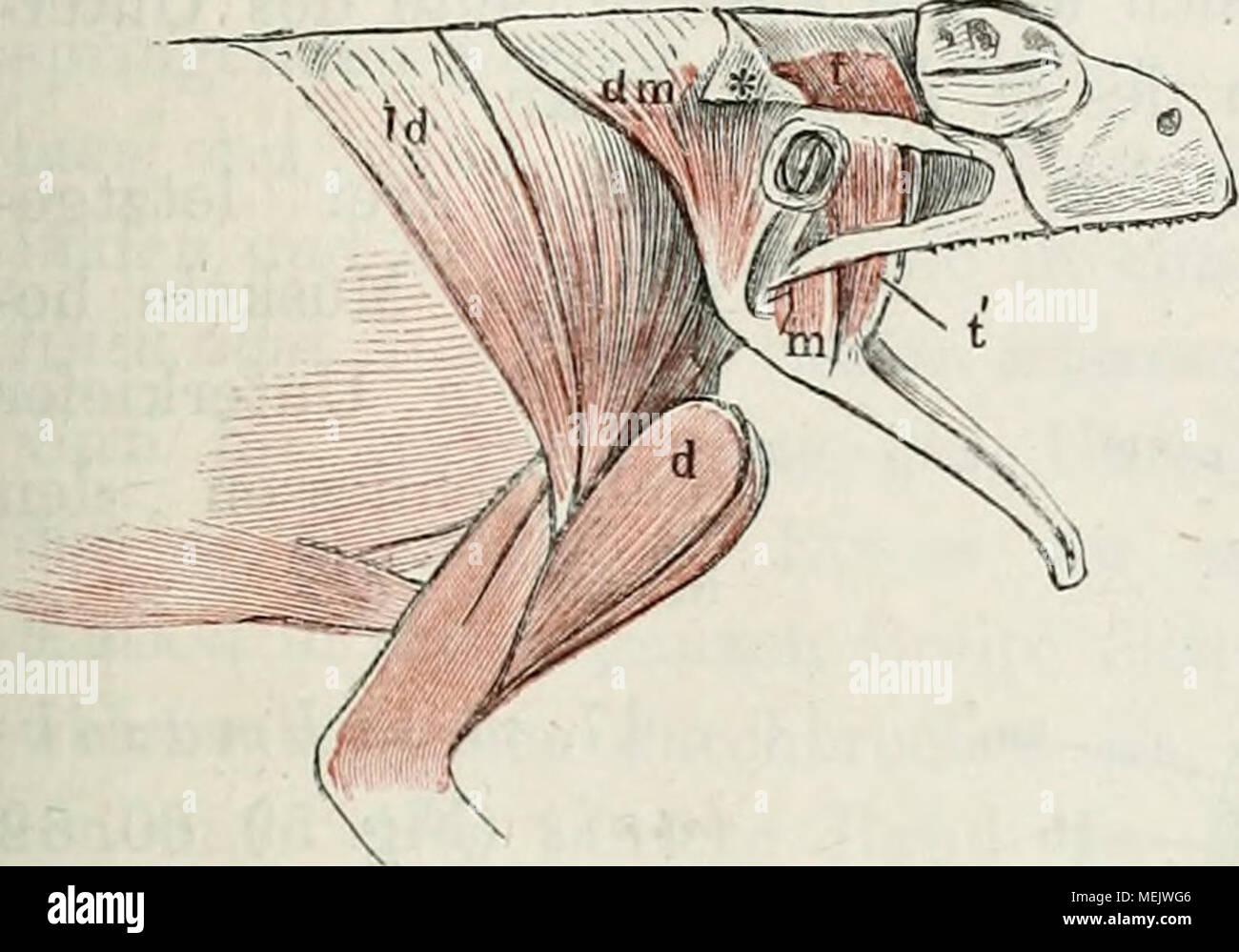 Ungewöhnlich Menschliche Zunge Anatomie Galerie - Anatomie Ideen ...