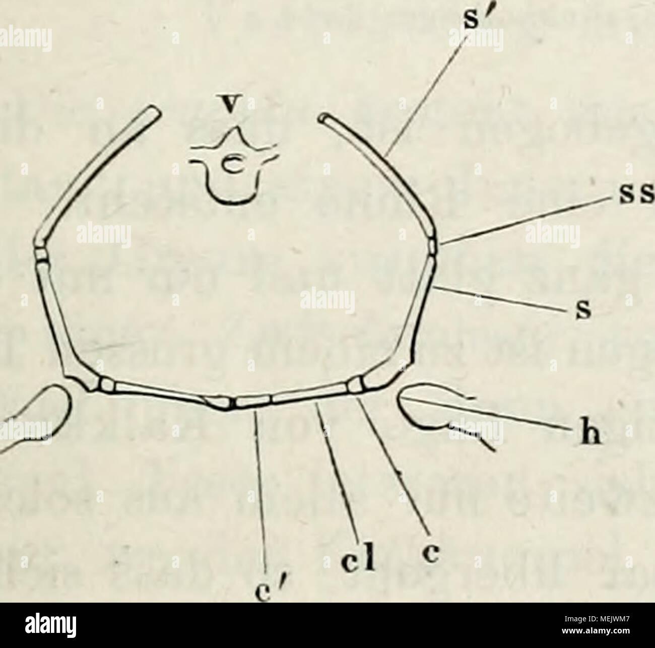 Tolle Diagramm Des Muskelsystems Etikettiert Ideen - Menschliche ...