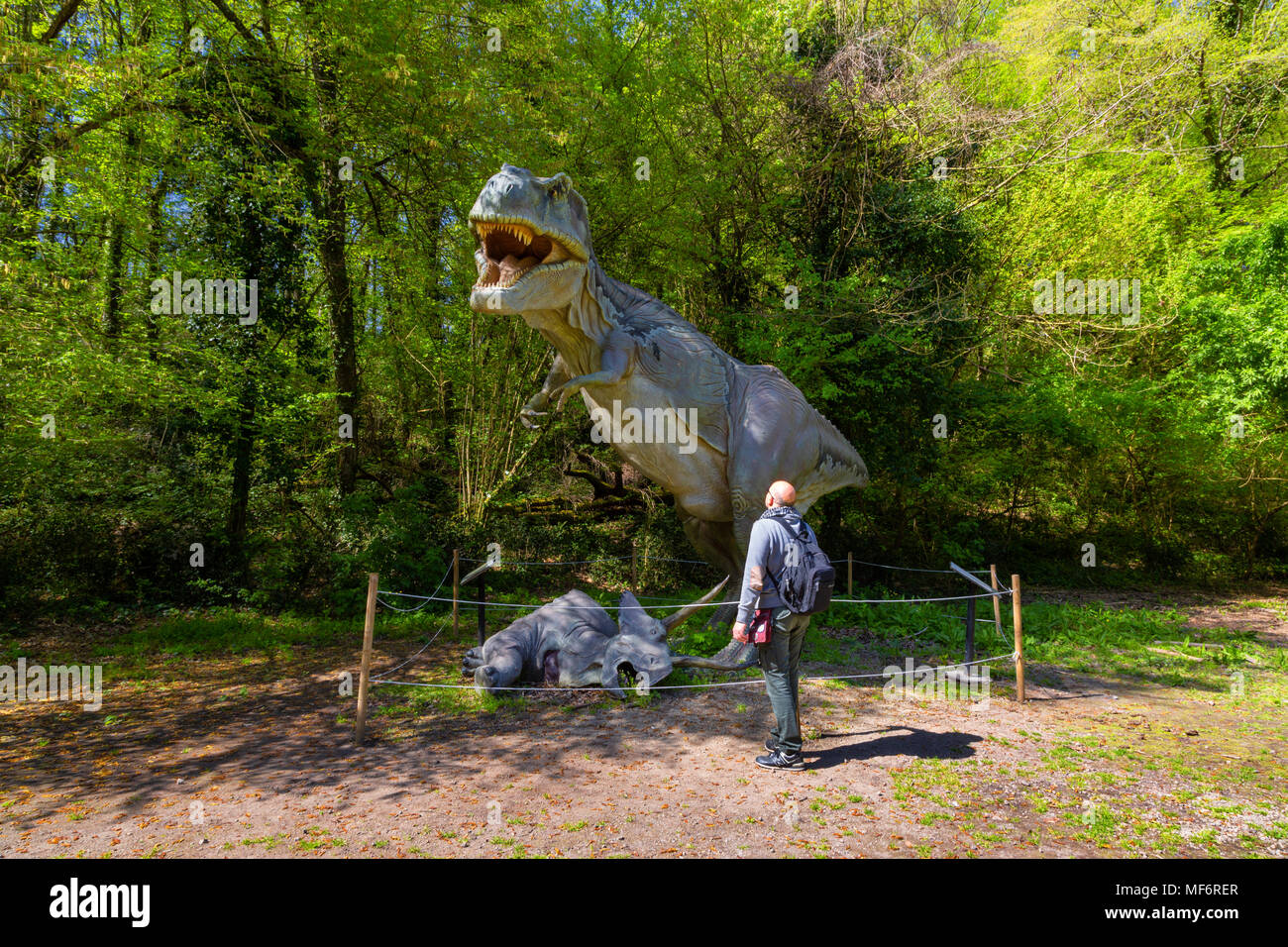 Naples (Italy) - The Cratere degli Astroni Nature Reserve is one of the few well-preserved craters of the whole Phlegraean fields. The dinosaurs creat - Stock Image