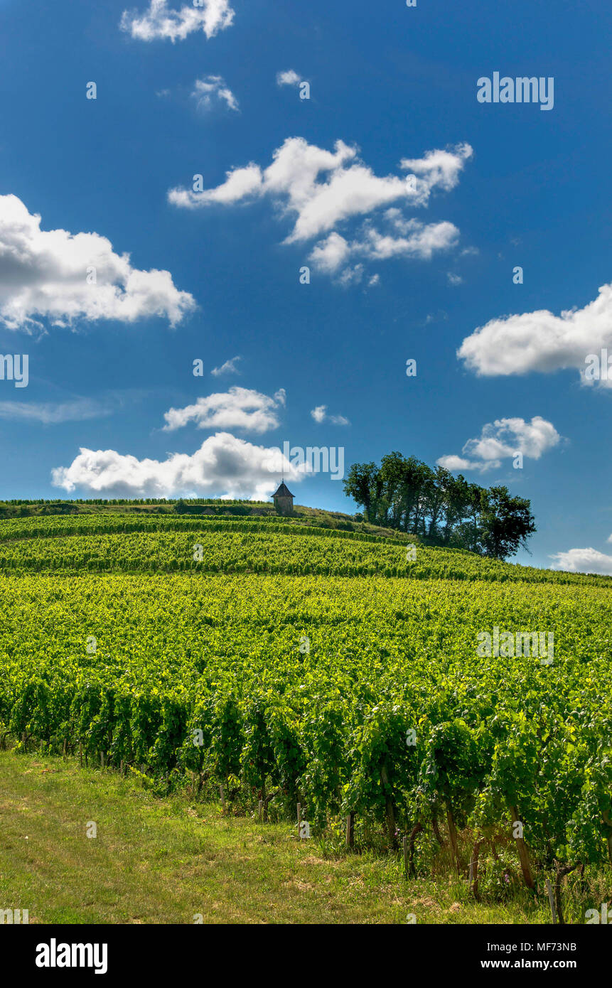 Vineyard of Saint-Émilion, Gironde, Aquitaine, France, Europe - Stock Image