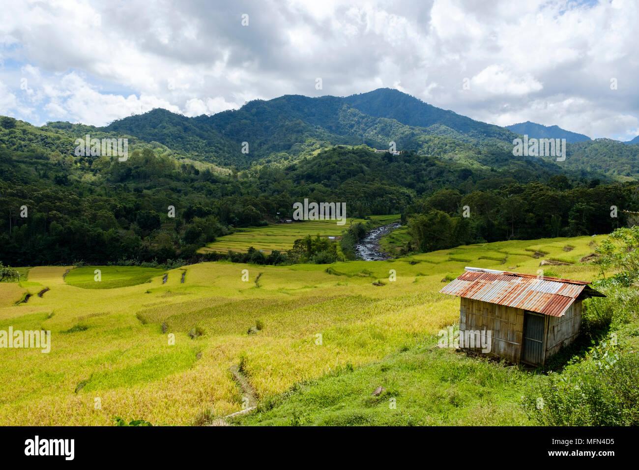 A hut overlooking verdant rice fields near Ende, Flores Island (East NUsa Tenggara), Indonesia. - Stock Image