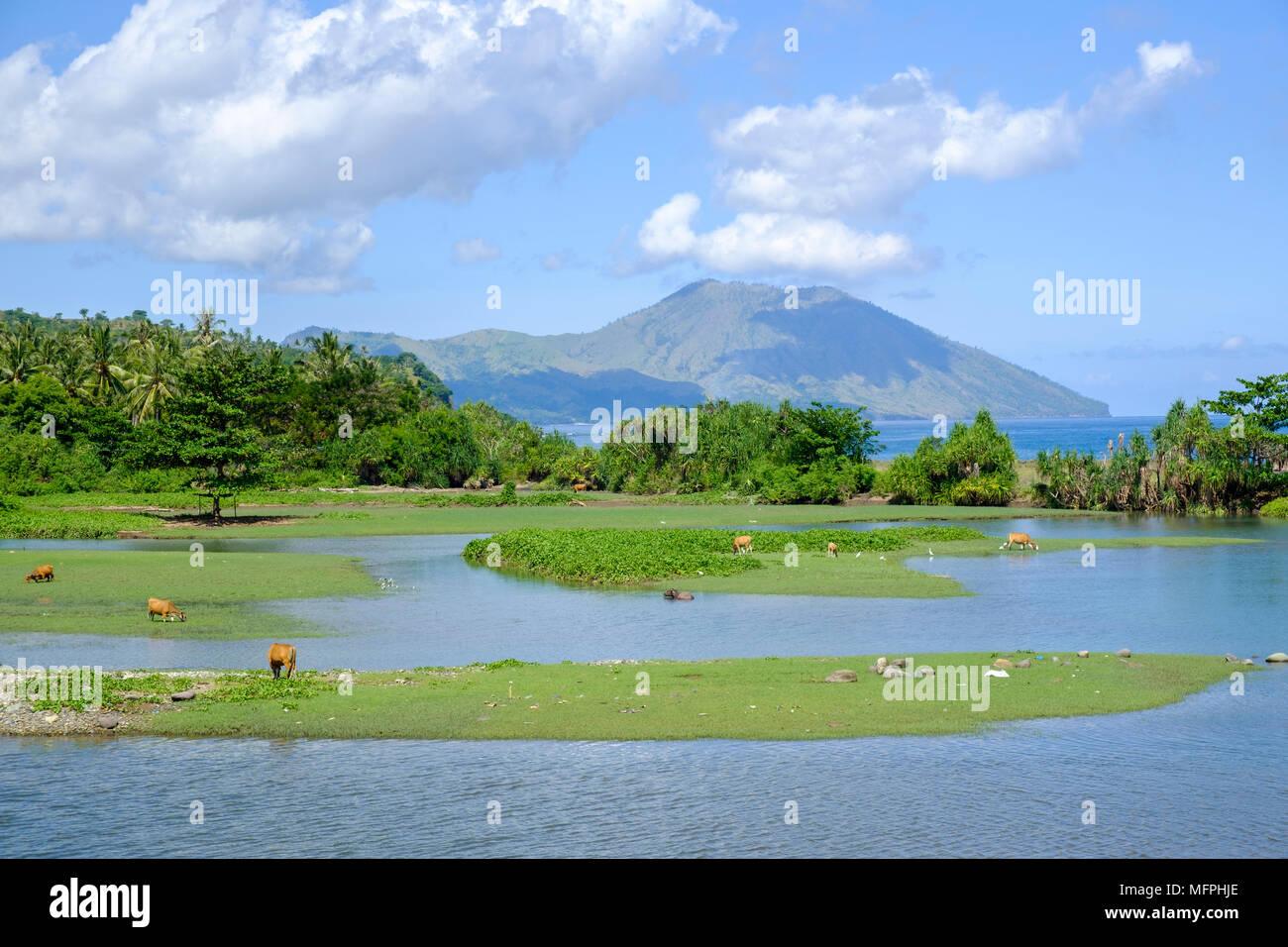 View of Mt. Iya, a volcano, across the Nanga Ba estuary, Ende Regency, Flores Island, Indonesia. - Stock Image