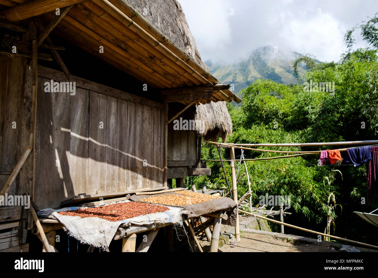 Nuts (most likely candlenuts or macadamia) laid out to dry outside a house in Bena traditional village, Ngada District, Island of Flores, Indonesia. - Stock Image